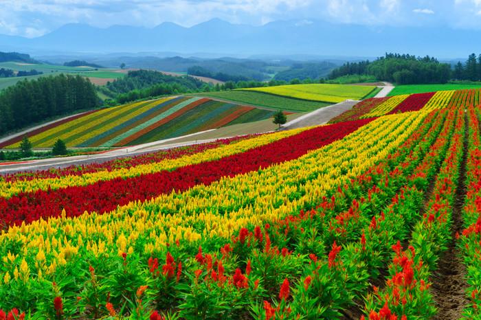 北海道で撮影したウェディングフォト by ファマリー